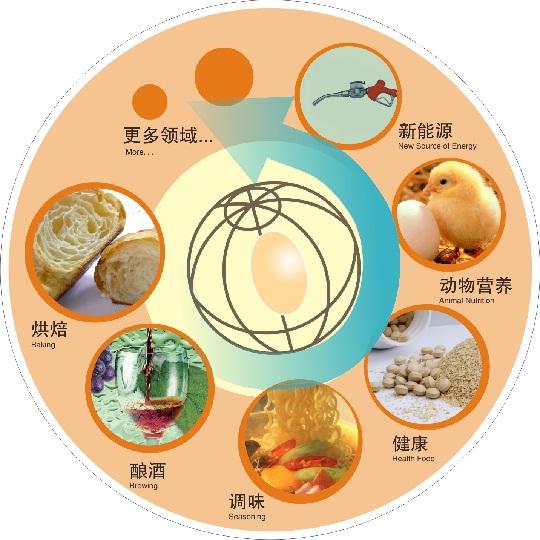 Application fields of yeast