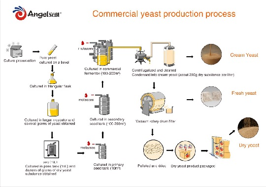 Commercial Yeast production process